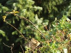 Bird Photos 04/12/18 - 01