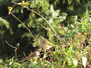 Bird Photos 04/12/18 - 18