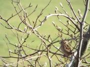 Bird Photos 04/12/18 - 019