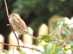 Bird Photos 04/12/18 - 20