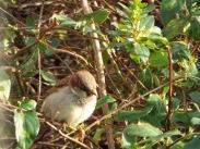 Bird Photos 04/12/18 - 02