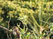 Bird Photos 04/12/18 - 03