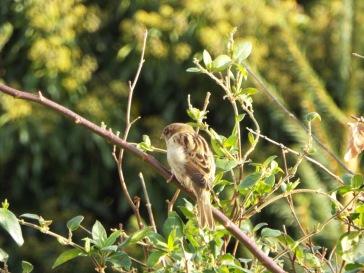 Bird Photos 04/12/18 - 04