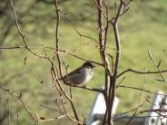 Bird Photos 04/12/18 - 16