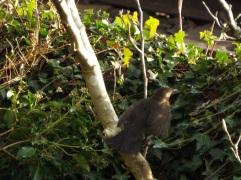 Bird Photos 04/12/18 - 15