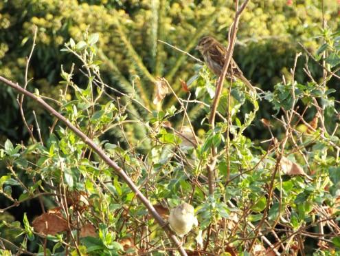 Bird Photos 04/12/18 - 14