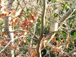 Bird Photos 04/12/18 - 05