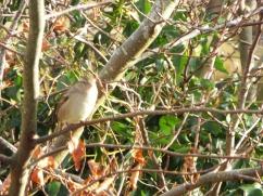 Bird Photos 04/12/18 - 06