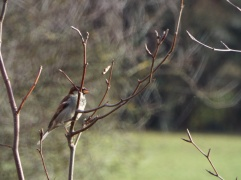 Bird Photos 04/12/18 - 07