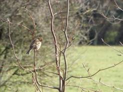 Bird Photos 04/12/18 - 08