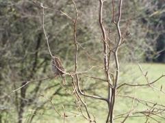 Bird Photos 04/12/18 - 09