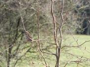 Bird Photos 04/12/18 - 10