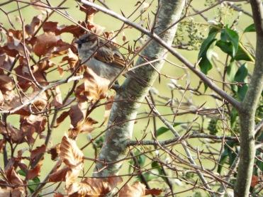 Bird Photos 04/12/18 - 11