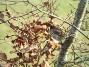Bird Photos 04/12/18 - 12