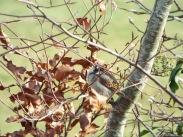 Bird Photos 04/12/18 - 13 (u wot m8?)